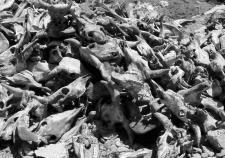 Мэрия Тобольска экономит на защите населения от сибирской язвы. Чиновники отказались отвечать за размытый скотомогильник