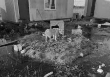 Зоозащитники истребляют животных в борьбе за бюджетные транши мэрии Сургута. Купировать конфликт просят прокуратуру ХМАО