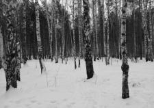 Минприроды спасет парк в Екатеринбурге от «Атомстройкомплекса»