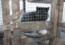 В Кондинском районе у лисьей фермы украли 700 килограммов кормушек