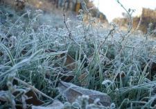 Ночью по Свердловской области ударят заморозки