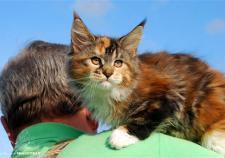 В Верхней Сысерти во время пожара в питомнике погибло 10 кошек