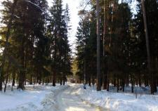 В Челябинской области обнаружили тело подростка в лесу