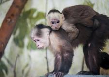 В зоопарке Екатеринбурга откроют «дошкольное учреждение»