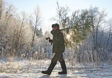 В Заводоуковске задержали похитителей елок