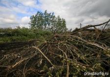 Житель Алапаевска получил 2,5 года «строгача» за вырубку 39 сосен
