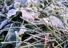 МЧС предупредило о заморозках в Тюменской области