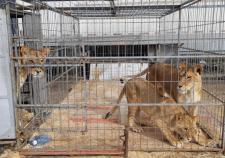 В Кургане местные фермеры привезли 750 килограммов корма голодающим животным цирка