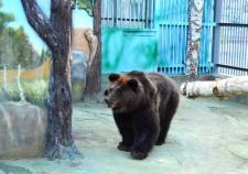 В екатеринбургском зоопарке отремонтировали медвежьи берлоги