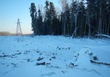 В Нефтеюганске мужчину обвинили в вырубке леса на 1,8 миллиона