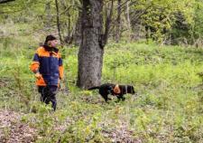 На Урале 3 ребенка и 1 юноша потерялись в лесу