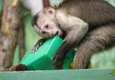 В Екатеринбургском зоопарке показали первых обитателей «детсада»