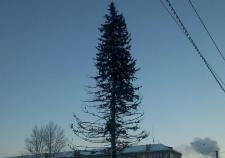 Жителей Копейска возмутила «лысая» новогодняя елка