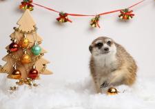 В Екатеринбургском зоопарке встретят католическое Рождество