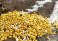 В Челябинской области уничтожили 800 килограммов испанских лимонов
