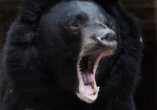 Медведи екатеринбургского зоопарка готовятся к спячке в обновленных берлогах