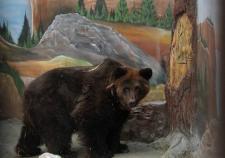 В Екатеринбургском зоопарке уснули медведи